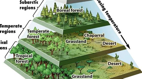 A Pyramid Map of the World's Biomes | Big Think