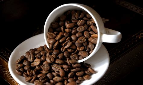 Coffee beans could power the cars of the future - DrinksFeed