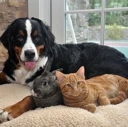 Chien, chat, lapin