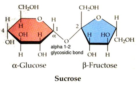 Classification Of Carbohydrates - Study Material for IIT