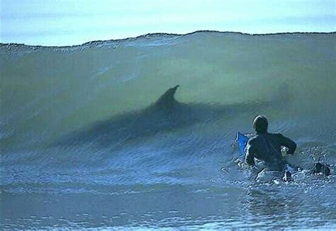 That would be freaky a great white shark in the wave you