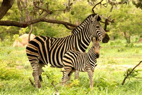 Wildlife of The Gambia and Senegal