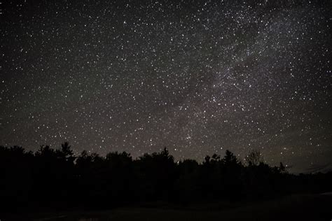 Stars above the forest image - Free stock photo - Public