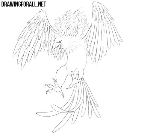 How to Draw a Phoenix | Drawingforall
